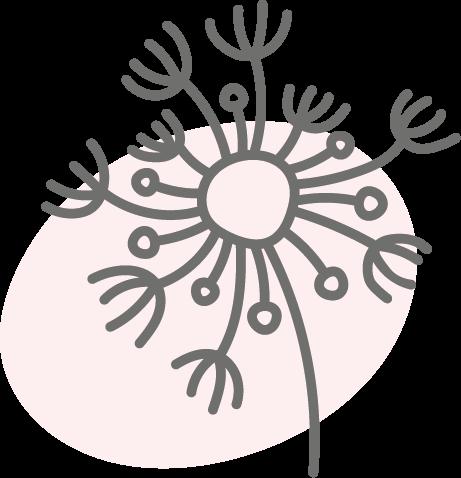 Botanicals - Angelikawurzel