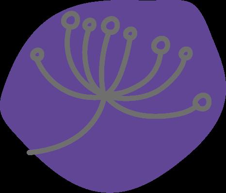 Botanicals - Holunderbeere