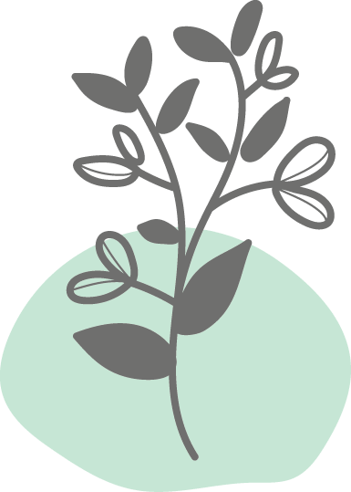 Botanicals - Hopfen
