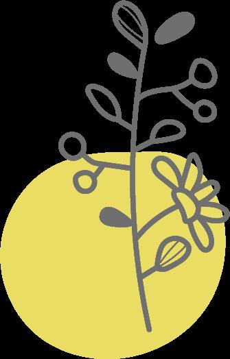 Botanicals - Orangenschale