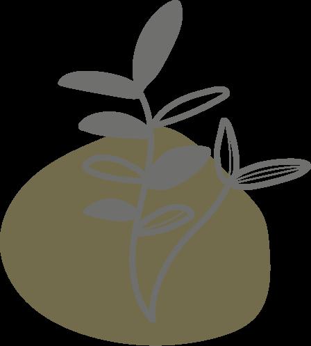 Botanicals - Süßholz